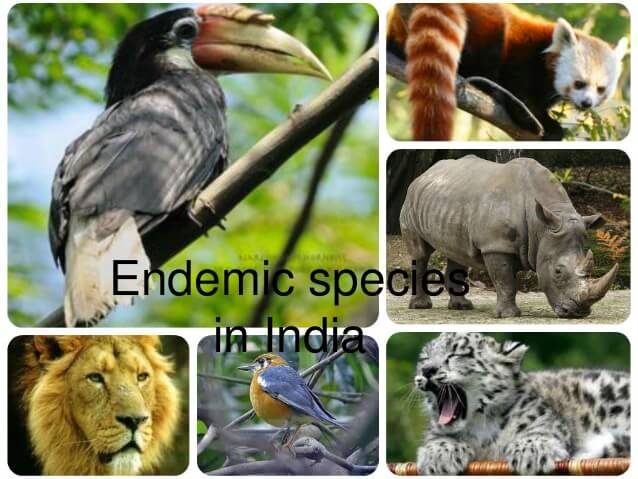 List of India Endemic Species of Animals and Birds