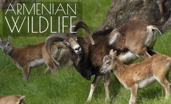 Ultimate List of Armenia Endangered Species of Animals  Plants and Birds that you Must to Know