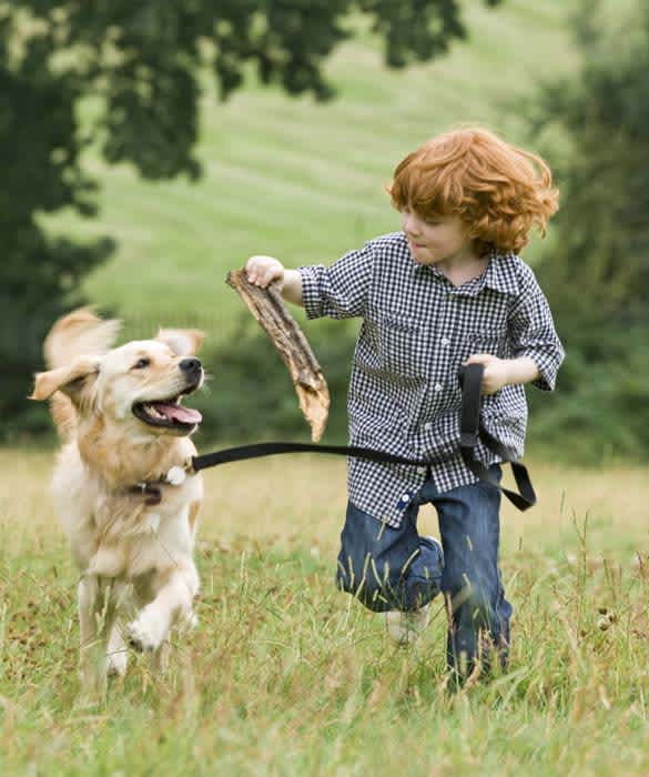 Things To Know Before Getting Your First Puppy; Family friendly