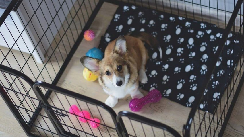 Things To Know Before Getting Your First Puppy; have all the accessories