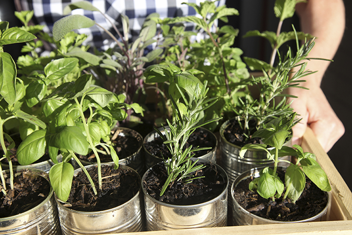 Mother's day gift ideas in 2021-Fresh Herbs
