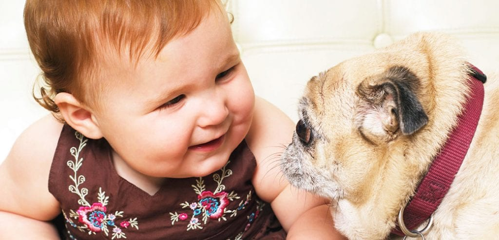 Things To Know Before Getting Your First Puppy
