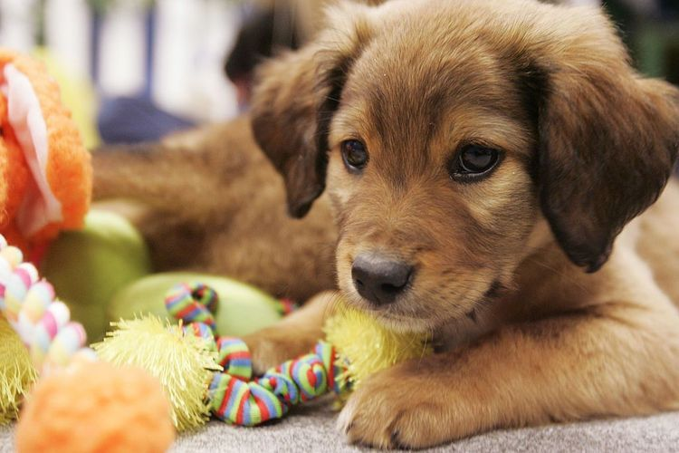 Things To Know Before Getting Your First Puppy; right kind of puppy