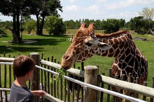 Visit a Zoo; what to do when you are bored at home