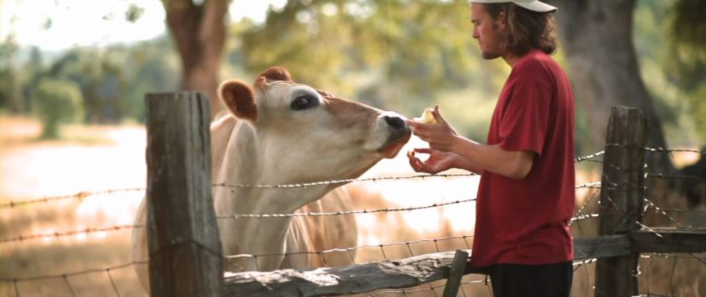 Best Conspiracy Theory Documentaries - cowspiracy