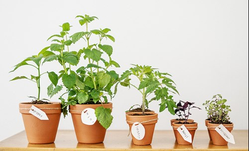 How to Grow Herbs Indoors for Beginners; Choose the most suitable pots for your indoor herb garden