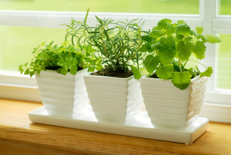 How to Grow Herbs Indoors for Beginners; Provide strong light for your indoor Herb Garden