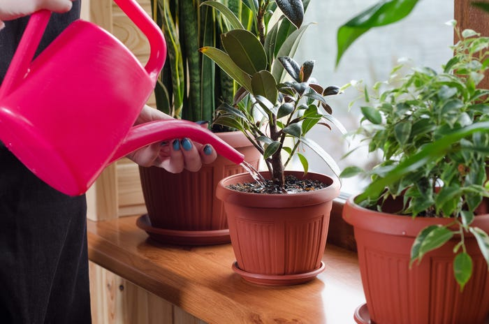 How to Grow Herbs Indoors for Beginners; Slow watering is Preferred
