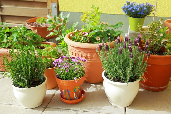 How to Grow Herbs Indoors for Beginners; Use Separate Pots to grow Different Herbs