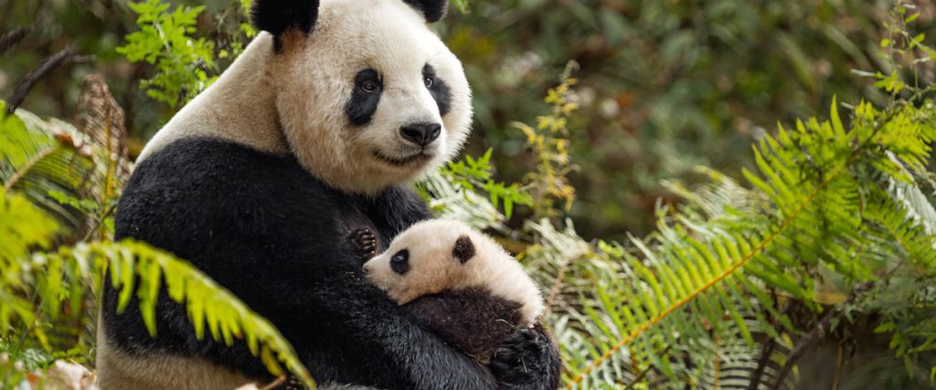 Wildlife and Nature Documentaries To Watch - Born-in-China