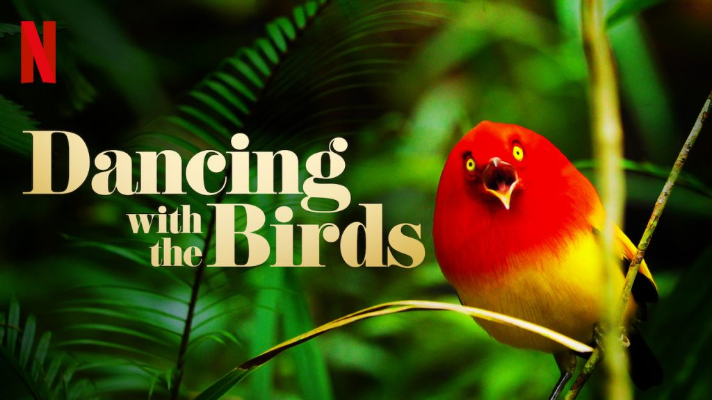 Wildlife and Nature Documentaries To Watch - dancing with the birds