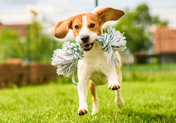 Soft Chew Toys For Dogs; Dog Rope Chew Toys