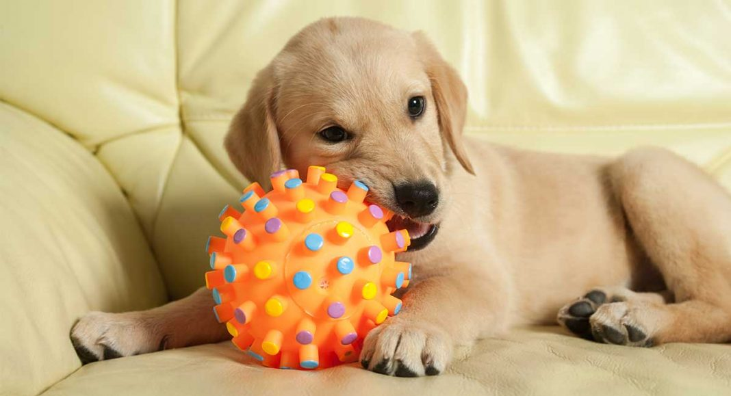 Soft Chew Toys For Dogs