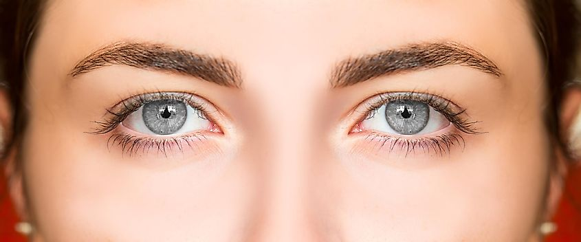 Biological Facts About Green Color Eyes