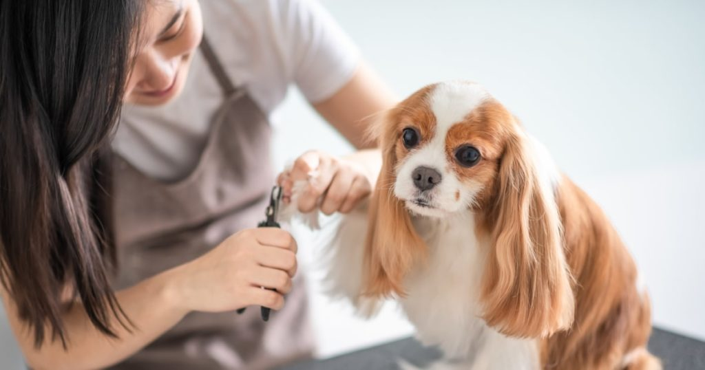 Must-Have Items For Dog